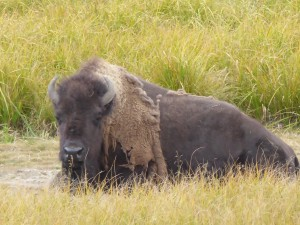 Yellowstone_August2015_12_copy